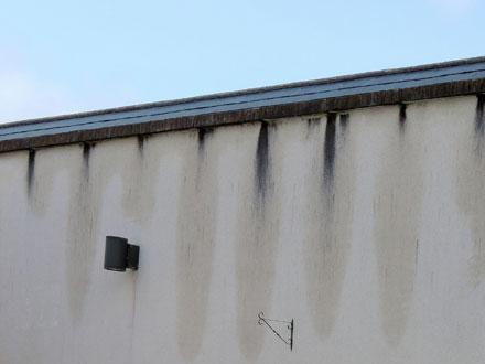 image of black-fungi on rendered wall chorley lancashire